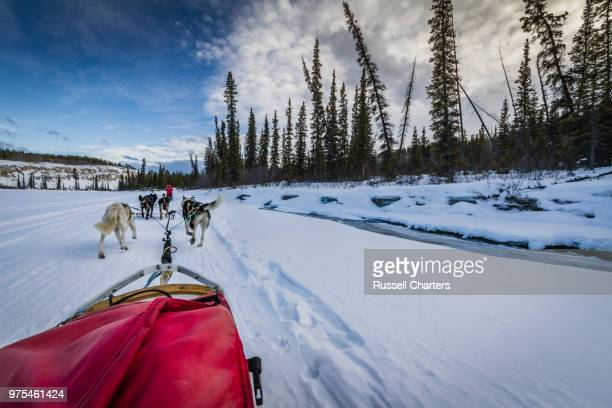 Dog sled team travelling through winter landscape, Yukon, Canada