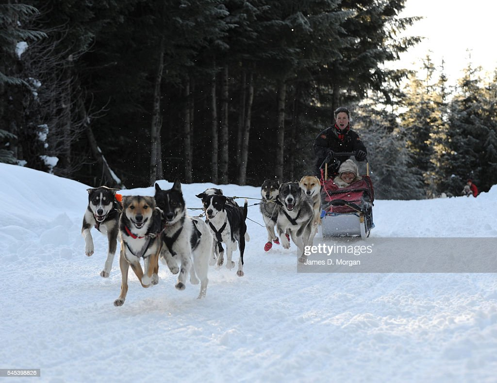 Dog Sledding In Whistler, Canada : News Photo