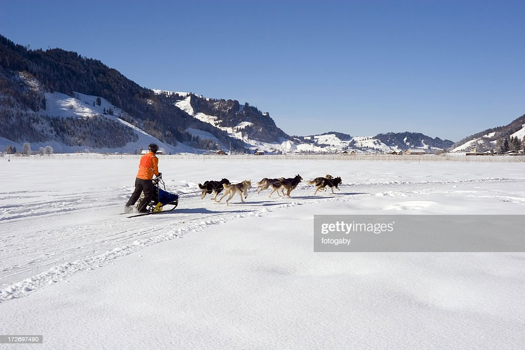Dog sledding competition : Stock Photo