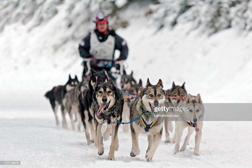 Hundeschlitten-Wettbewerb : Stock-Foto