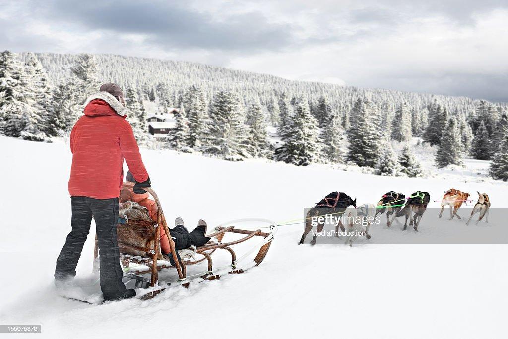 ノルウェーの犬ゾリ : ストックフォト