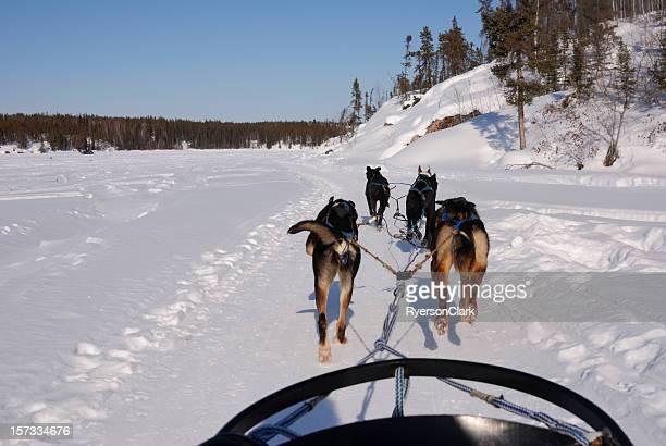 Slitte trainate da cani nel circolo polare artico.