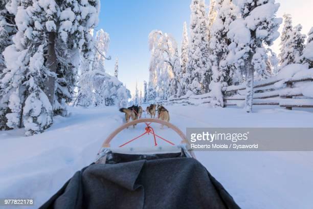 Dog sledding in the snow covered forest, Kuusamo, Northern Ostrobothnia region, Lapland, Finland