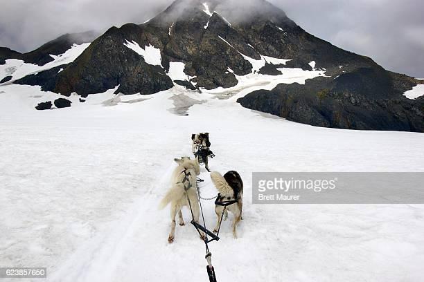 Dog Sledding on Punchbowl Glacier, Alaska, USA