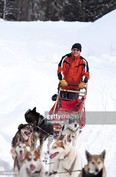 dog sledding - dogsledding stock photos and pictures