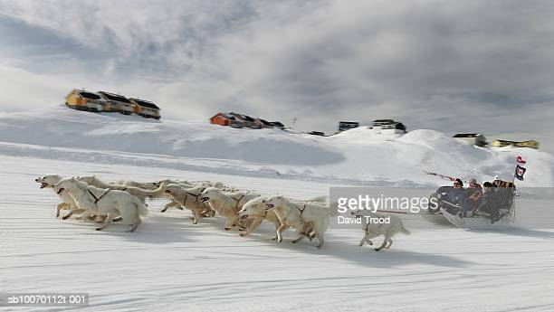 dog sledding - working animal stock pictures, royalty-free photos & images