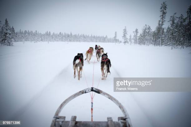 Dog sledding seen from sled, Finland