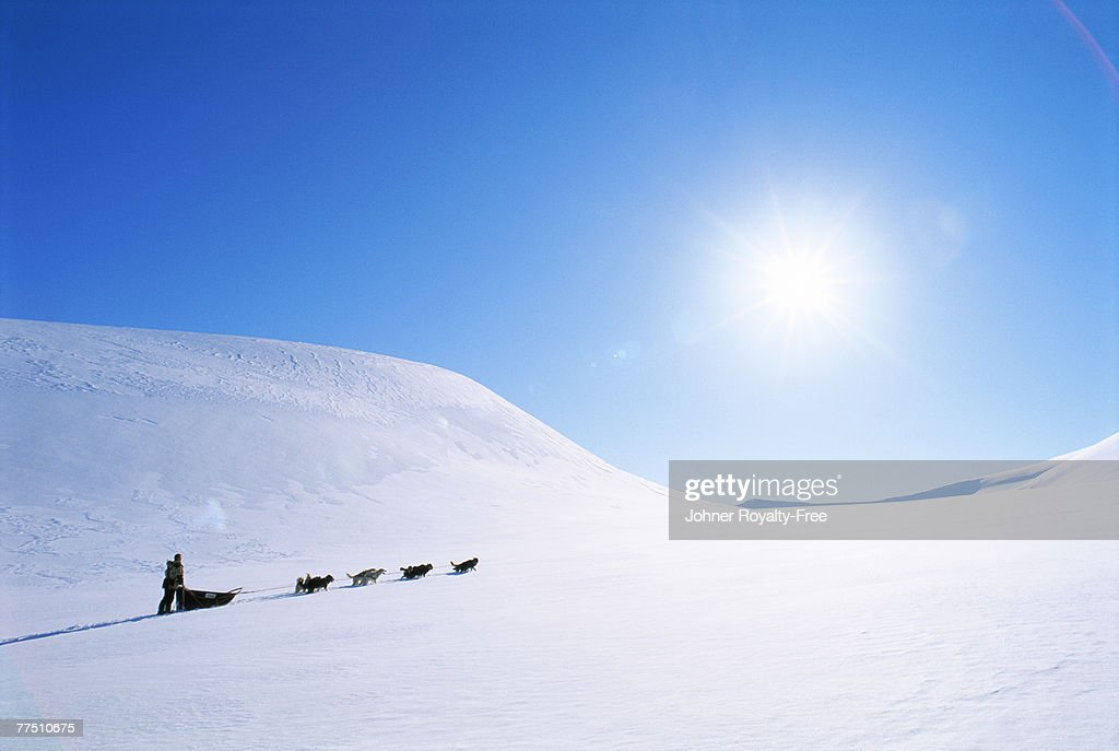 A dog sledge in the mountains. : Stock Photo