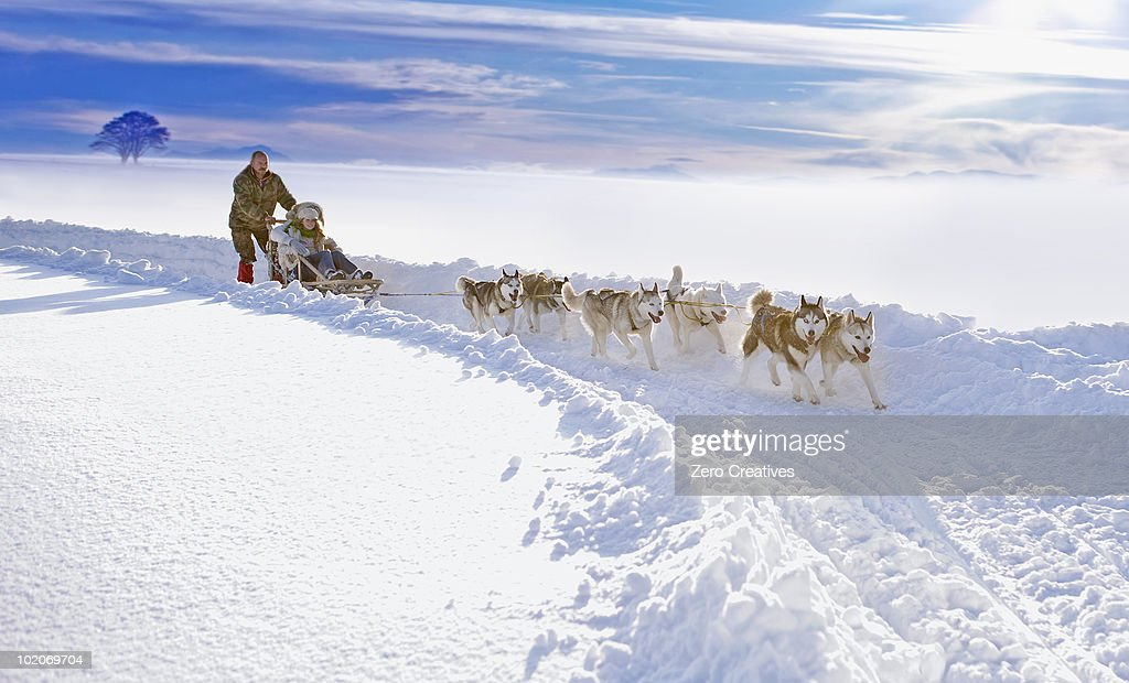 Dog sledge : Stock-Foto