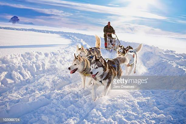 dog sledge - rushing the field stock pictures, royalty-free photos & images