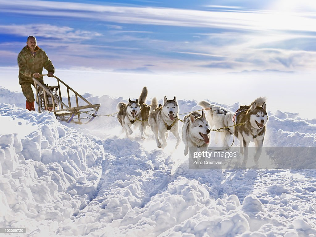 Dog sledge race : Stock Photo