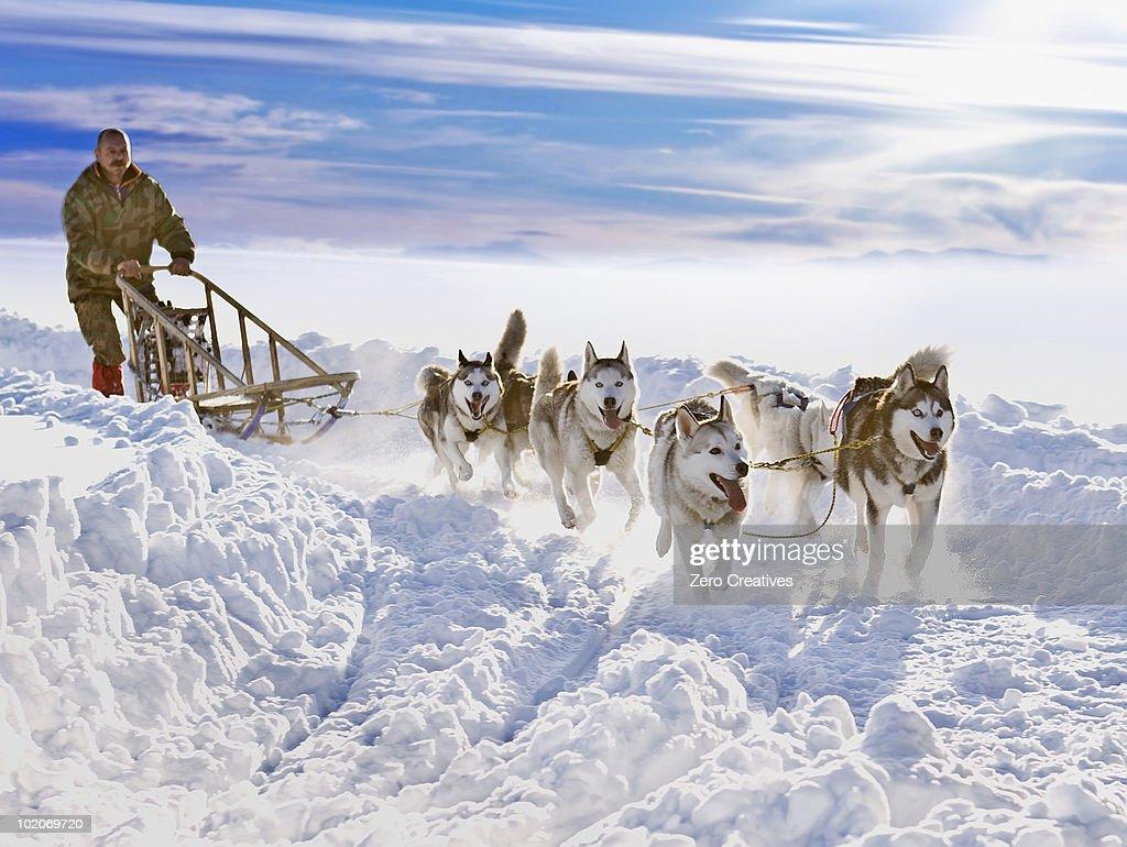 Dog sledge race : Stock-Foto