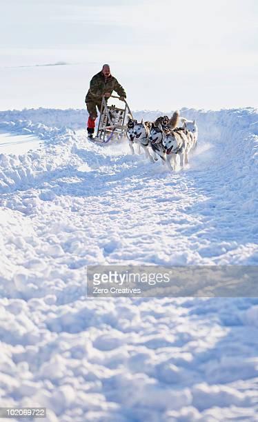 犬スレッジレース - 犬ぞりに乗る ストックフォトと画像