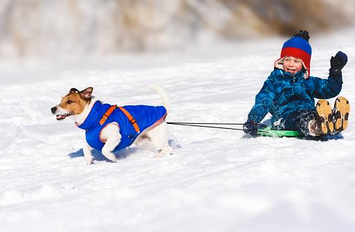 Dog sledging happy boy on slippery downhill toboggan 1090573172