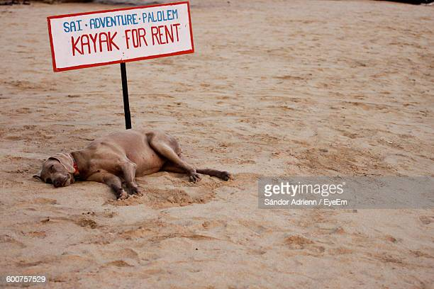 Dog Sleeping By Signboard On Sand At Palolem Beach