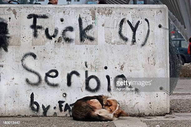 Dog sleeping in front of a graffiti : Fuck Serbia wich was made by Albanians in the southern side of Ibar main bridge in Mitrovica