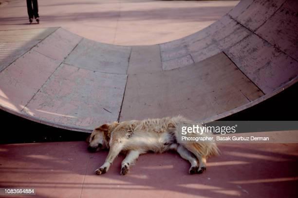 Dog sleeping in skatepark