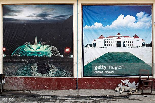a dog sleeping in the street - naypyidaw stock pictures, royalty-free photos & images