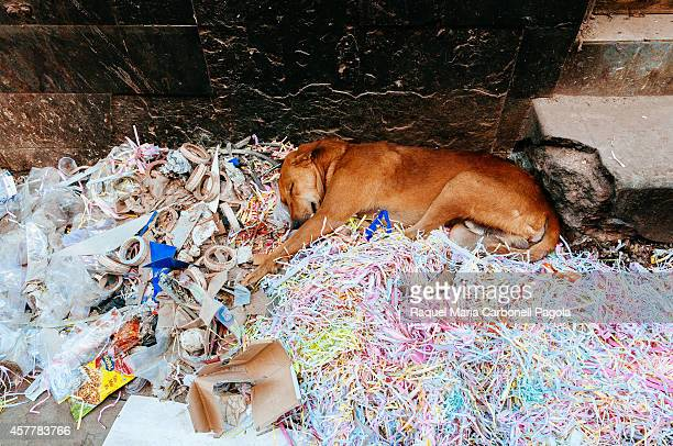 Dog sleeping on garbage on the street