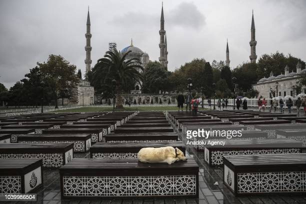 A dog sleeps during rainfall at Sultanahmet district of Istanbul Turkey on September 25 2018