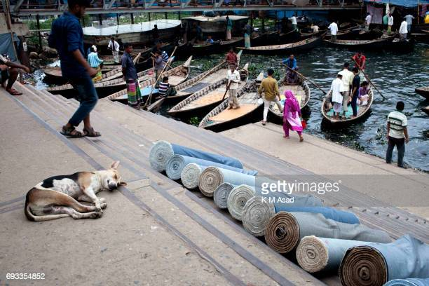 SADARGHAT DHAKA BANGLADESH A dog sleeps in the Sodorghat launch terminal beside the Burigonga River on the day before of World Environment Day A...