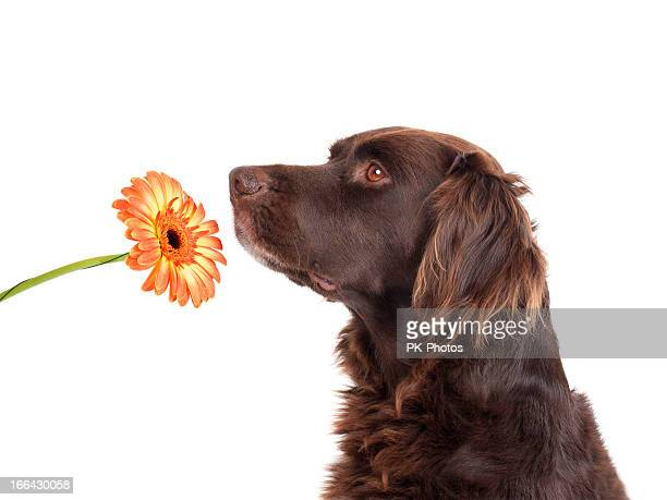 Dog smelling a flower