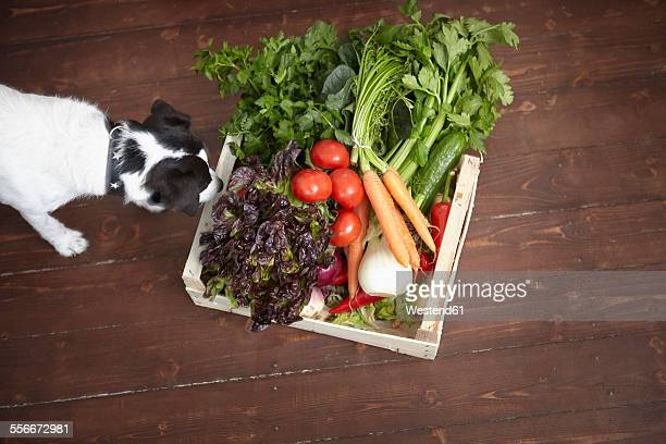 Dog smelling on crate full of fresh vegetables