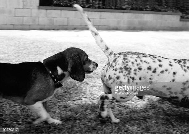 Dog smelling other dog