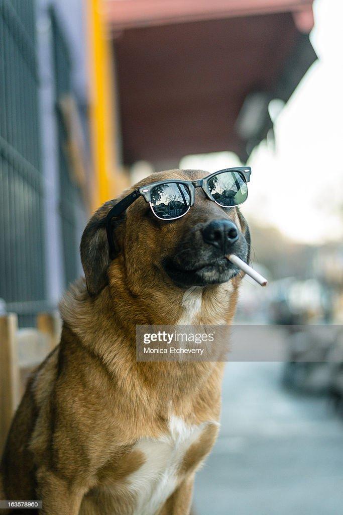 Dog smoking : Stock Photo