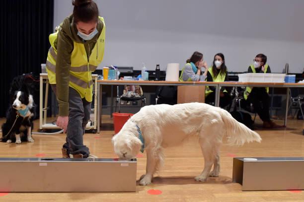ITA: Covid-19 Sniffing Dogs Activity In A School In Bolzano