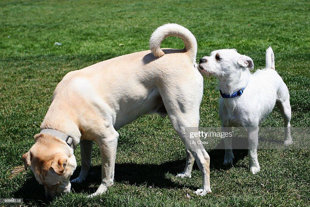 Dog sniffs dog : Stock Photo
