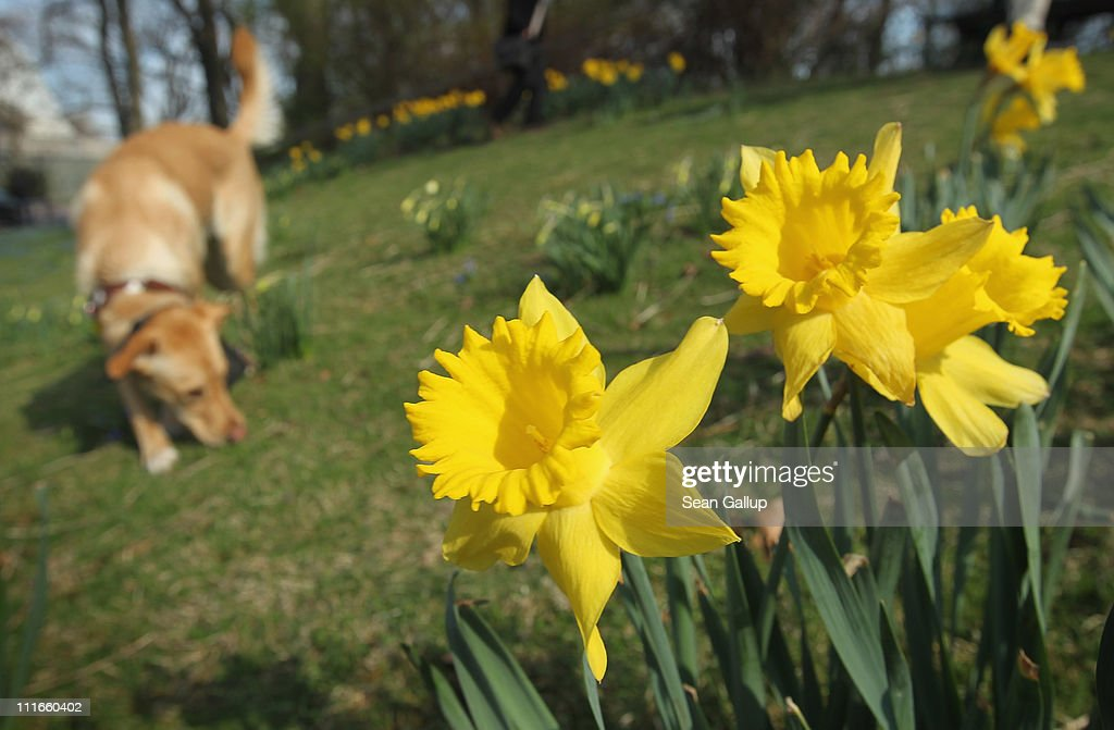 Spring Weather Reaches Germany : News Photo