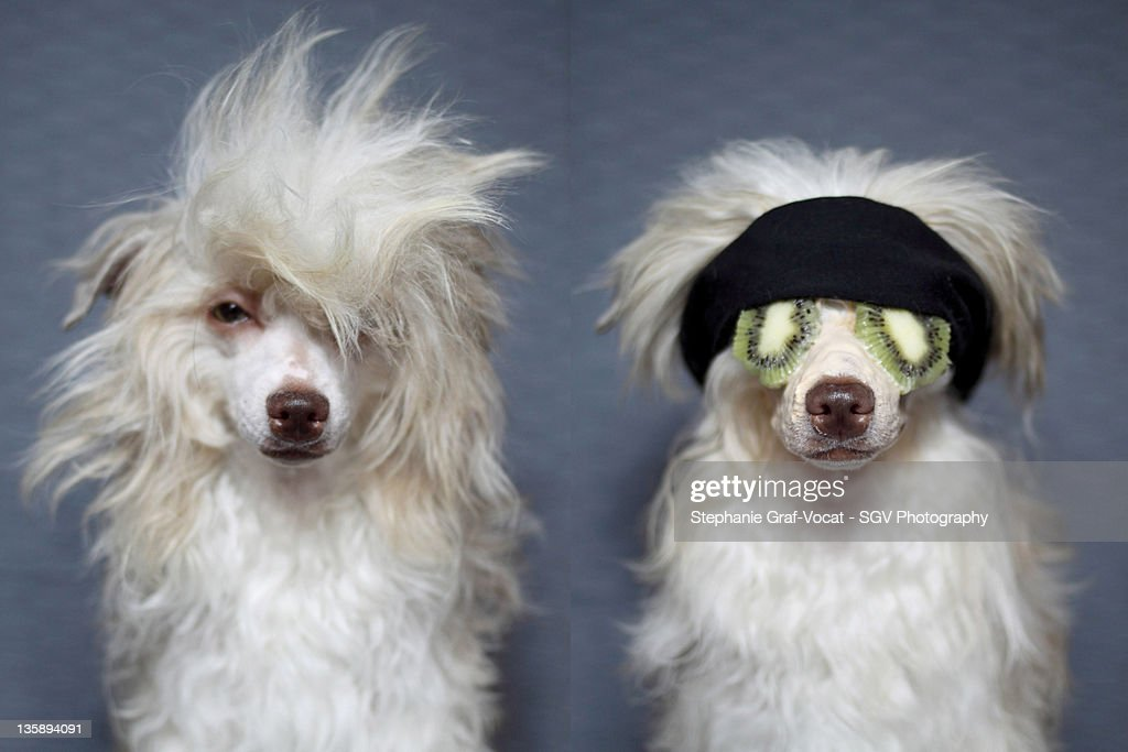 Dog spa : Stock Photo