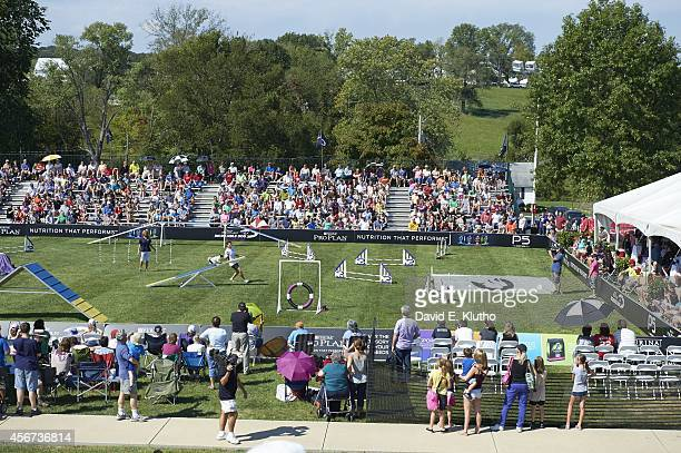 Purina Incredible Dog Challenge Overall view of dogs in obstacle course action during Incredible Agility Competiton at Purina Farms Gray Summit MO...