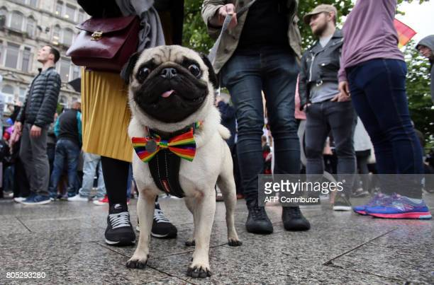 A dog sports a rainbow bow as gay rights campaigners take part in a march through Belfast on July 1 2017 to protest against the ban on samesex...