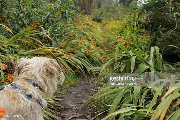 Dog Standing Amidst Plants At Park