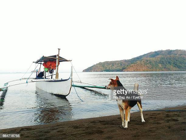 Dog Standing By Boat At Beach