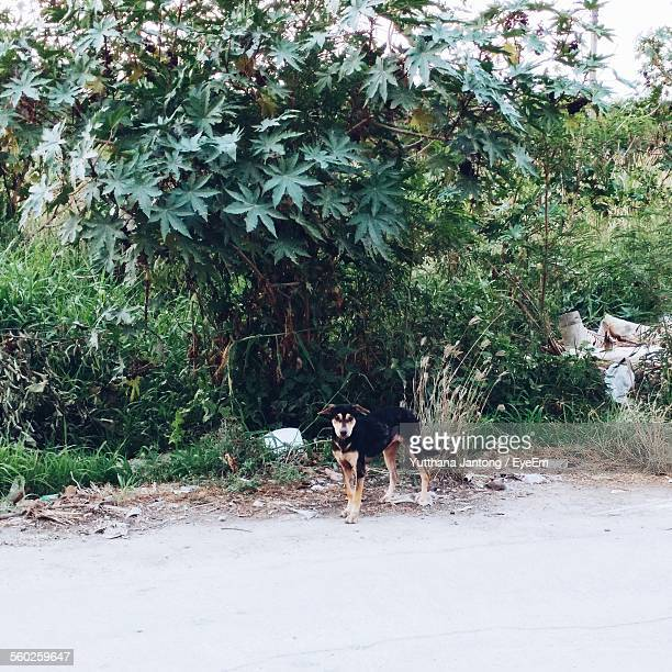 Dog Standing By Bush, Rubbish In Background
