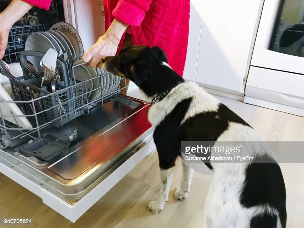 Dog Standing By Woman Keeping Utensils In Dish Washer