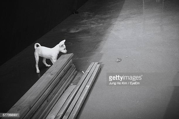 dog standing by wooden planks on street - kim jung un foto e immagini stock