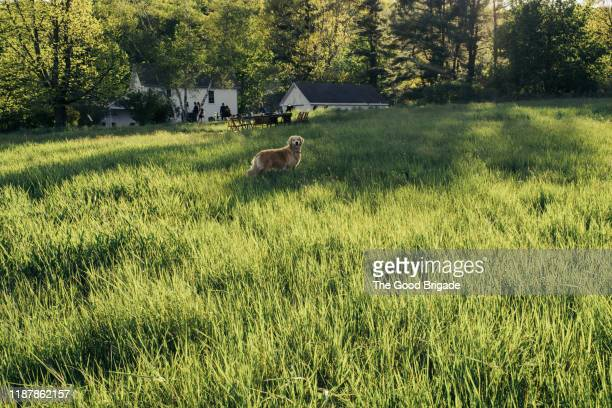 dog standing in grassy field on sunny day - wide shot stock pictures, royalty-free photos & images