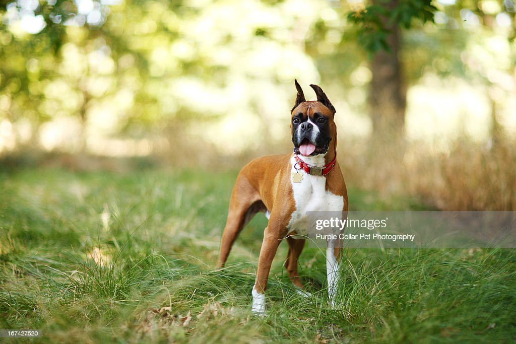 Dog Standing in Tall Grass : Stock Photo