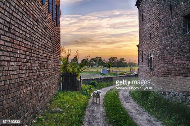 Dog Standing On Dirt Road Amidst Buildings Against Sky During Sunset
