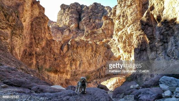 dog standing on rock against mountains - boulder city stock photos and pictures