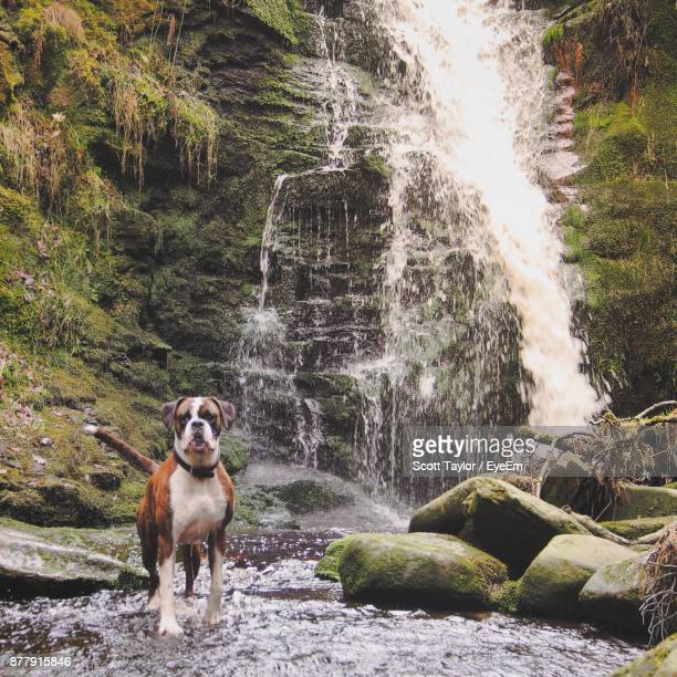 Dog Standing On Rock Against Waterfall