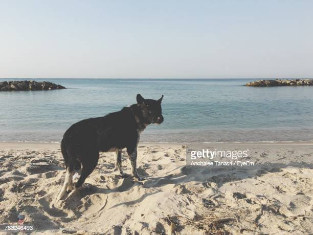 Dog Standing On Sand At Beach