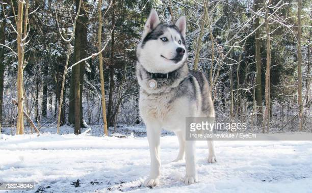 Dog Standing On Snow Field Against Trees During Winter