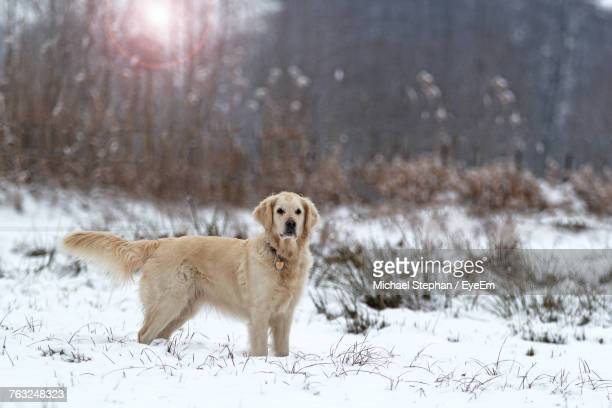 Dog Standing On Snowy Field