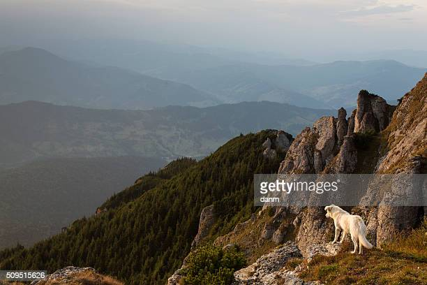 Dog standing on the background of mountain scenery