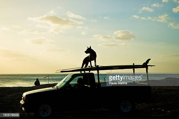 dog standing on top of car - americas next top dog stock pictures, royalty-free photos & images